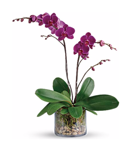 Orchids - Kathy's Florist Fort Lauderdale Flower Delivery